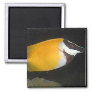 Foxface Rabbitfish Square Magnet