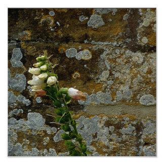 Foxglove and Stone Photo Print