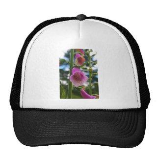Foxglove Trucker Hat