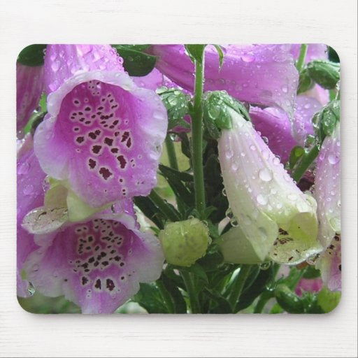 Foxglove with dew mouse pads