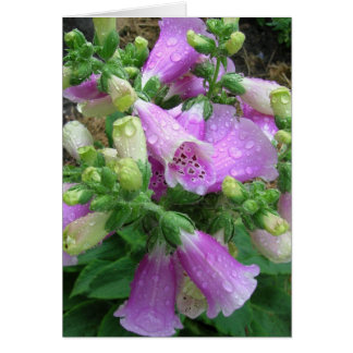 Foxglove with dew note card
