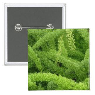 Foxtail Fern, Asparagus densiflorus myers 15 Cm Square Badge