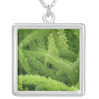 Foxtail Fern, Asparagus densiflorus myers Silver Plated Necklace