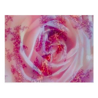 fractal rose, pink postcards
