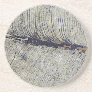 Fragile Fossil Plant Leaf Coaster