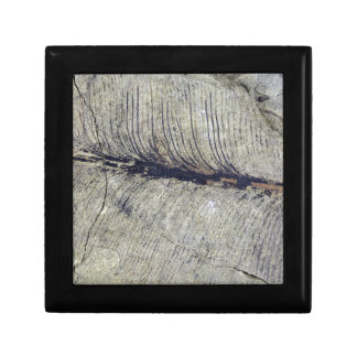 Fragile Fossil Plant Leaf Small Square Gift Box
