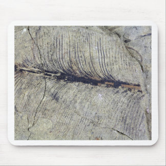 Fragile Fossil Plant Leaf Mouse Pad