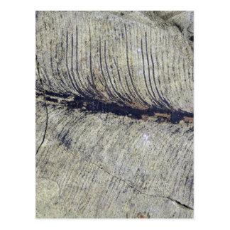 Fragile Fossil Plant Leaf Postcard