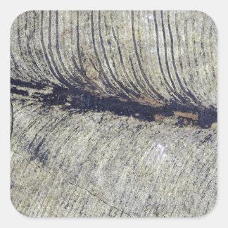 Fragile Fossil Plant Leaf Square Sticker