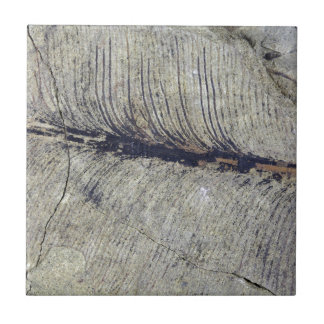 Fragile Fossil Plant Leaf Small Square Tile
