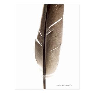Fragile white feather postcard