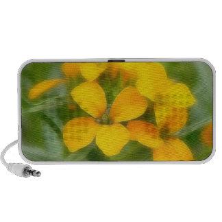 Fragrant Orange Cheiranthus iPhone Speaker