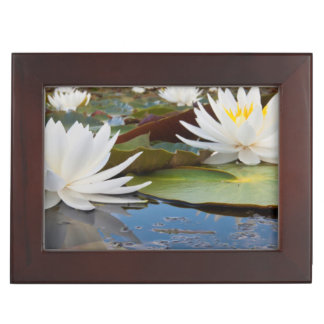 Fragrant Water Lily (Nymphaea Odorata) On Caddo Memory Boxes