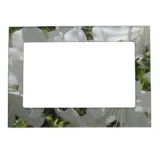 Frame - Magnetic - White Azaleas Frame Magnet