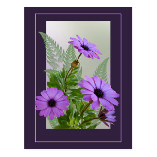 Framed Purple Daisies Postcard - TBA