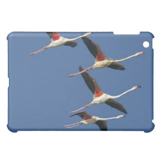 France, Bouches du Rhone, Camargue, Greater iPad Mini Case