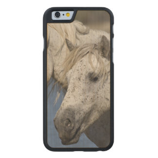 France, Camargue. Horses run through the Carved® Maple iPhone 6 Case