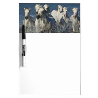 France, Camargue. Horses run through the estuary 4 Dry Erase Board