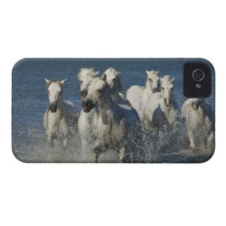 France, Camargue. Horses run through the estuary 4 iPhone 4 Case-Mate Case