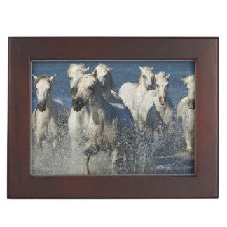 France, Camargue. Horses run through the estuary 4 Keepsake Box