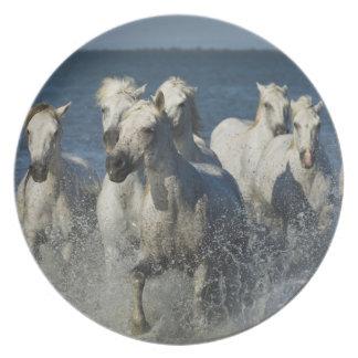 France, Camargue. Horses run through the estuary 4 Plate