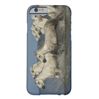 France, Camargue. Horses run through the estuary Barely There iPhone 6 Case