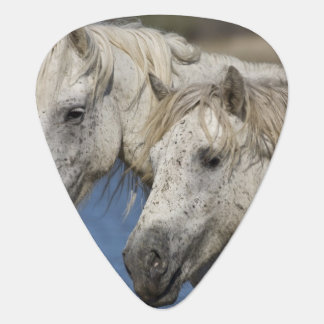 France, Camargue. Horses run through the Guitar Pick
