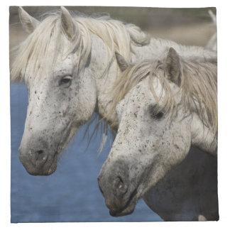 France, Camargue. Horses run through the Napkin