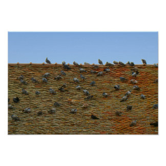 France, Jura, Arbois, Pigeons on the roof Poster