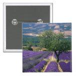 France, PACA, Alpes de Haute Provence, 3 15 Cm Square Badge