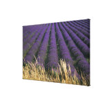 France, PACA, Alpes de Haute Provence, 3 Stretched Canvas Prints