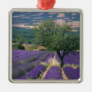 France, PACA, Alpes de Haute Provence, 3 Christmas Ornaments