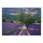 France, PACA, Alpes de Haute Provence, 3 Greeting Card