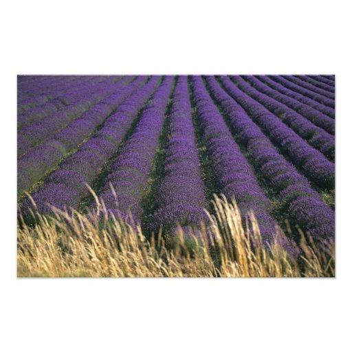 France, PACA, Alpes de Haute Provence, 3 Photo Art