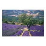 France, PACA, Alpes de Haute Provence, 3 Photo Print