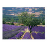 France, PACA, Alpes de Haute Provence, 3 Postcard