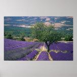 France, PACA, Alpes de Haute Provence, 3 Poster