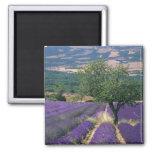 France, PACA, Alpes de Haute Provence, 3 Square Magnet