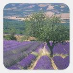 France, PACA, Alpes de Haute Provence, 3 Square Sticker