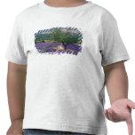 France, PACA, Alpes de Haute Provence, 3 T Shirts