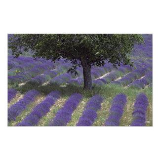 France, PACA, Alpes de Haute Provence, Photo