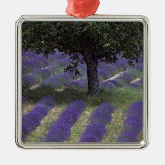 France, PACA, Alpes de Haute Provence, Silver-Colored Square Decoration