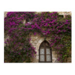 France, Provence, Eze. Bright pink Postcard