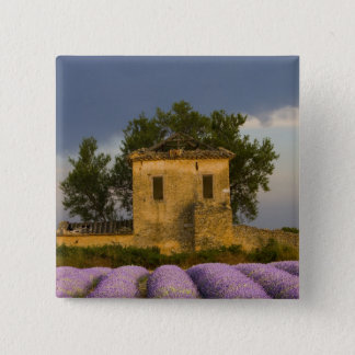 France, Provence. Field of lavender and 15 Cm Square Badge