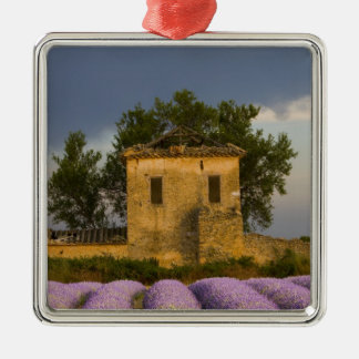 France, Provence. Field of lavender and Christmas Ornament
