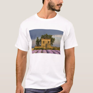 France, Provence. Field of lavender and T-Shirt
