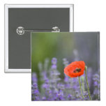 France, Provence. Lone poppy in field of Pinback Button