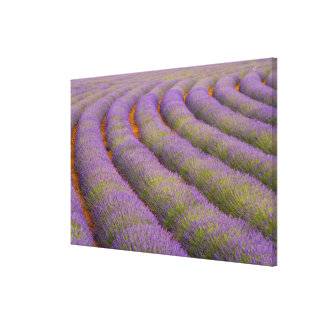 France, Provence region. Curved rows of Canvas Print