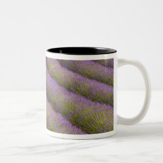 France, Provence region. Curved rows of Two-Tone Coffee Mug