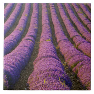 France, Provence Region. Orderly rows of Tile